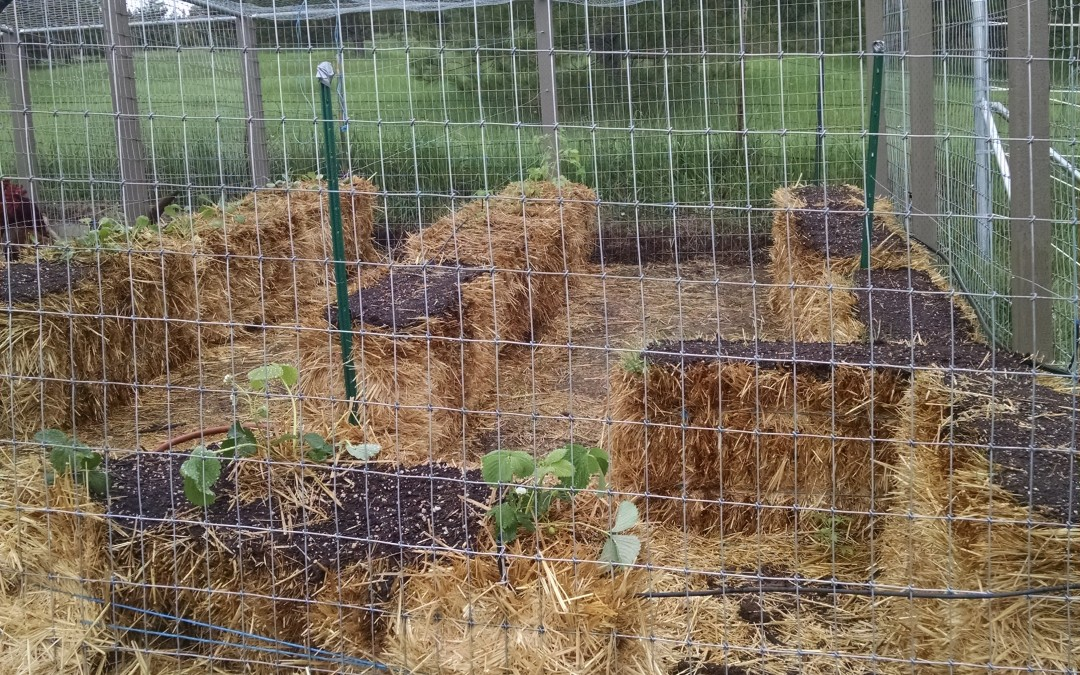 STRAW BALE GARDEN. The Beginning!