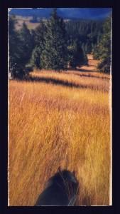 Summer in Idaho 1
